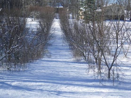 Morristown snow
